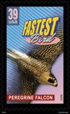 Fastbird39_sgl_bgv2